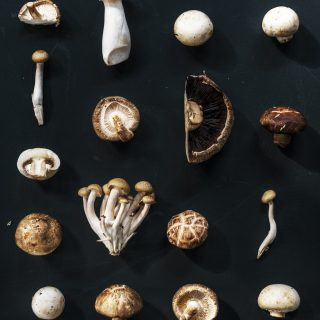 Aerial view of various mushroom collection of black background